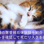 猫の尿管結石体験談を紹介!トイレの様子を確認して死亡リスクを低下!