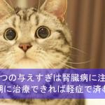 おやつを与えすぎの猫は腎臓病に注意!初期に治療できれば軽症で済む!