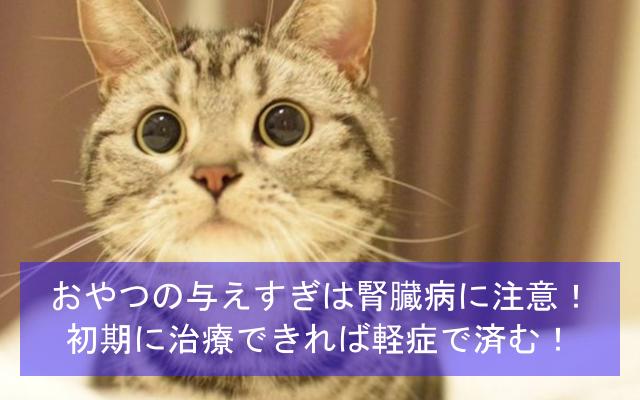 おやつを与えすぎの猫は腎臓病に注意