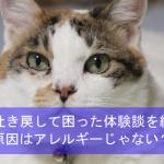 猫が吐き戻して困った体験談を紹介!原因はアレルギーじゃない?