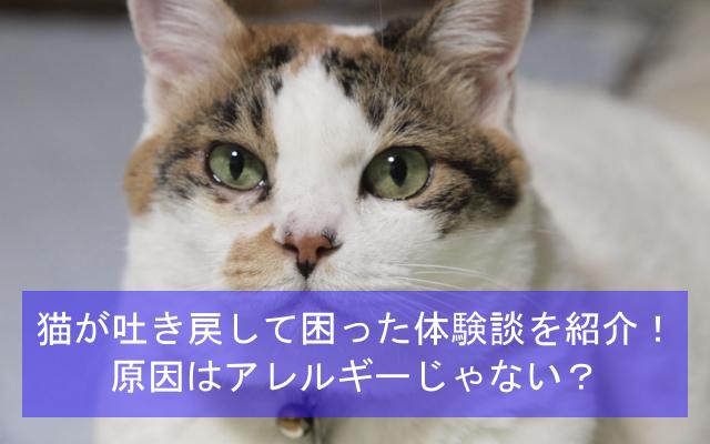 猫が吐き戻して困った体験談を紹介!