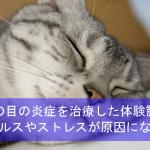 猫の目の炎症を治療した体験談!ウイルスやストレスが原因になることも!