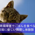 猫が胃腸障害でキャットフードを食べない!胃腸に優しい餌探し体験談!