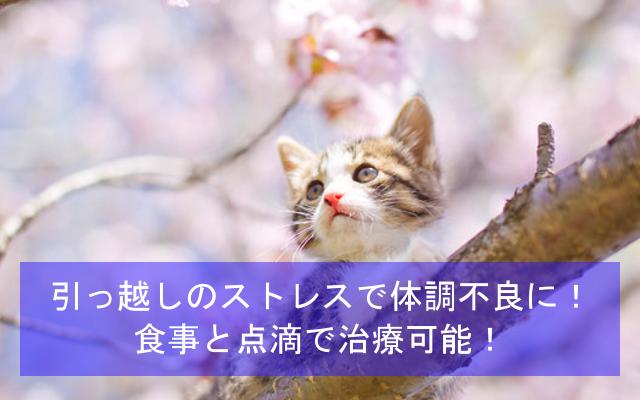 猫が引っ越しのストレスで体調不良