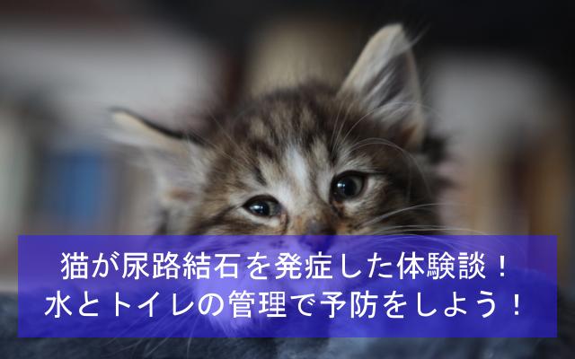 猫が尿路結石を発症した体験談