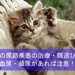 猫の尿路疾患の治療・餌選び体験談を紹介!血尿・頻尿があれば注意!