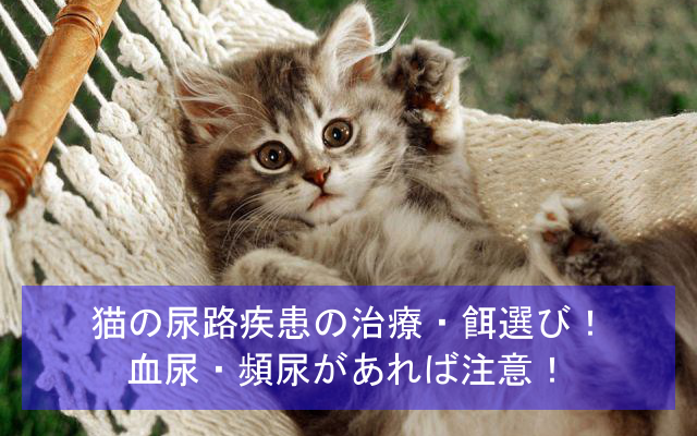 猫の尿路疾患の治療・餌選び体験談