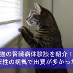 猫の腎臓病体験談を紹介!先天性の病気で病院通いの出費が多かった!
