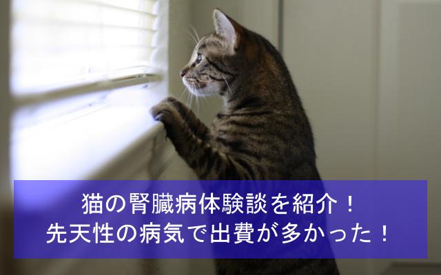 猫の腎臓病体験談を紹介!