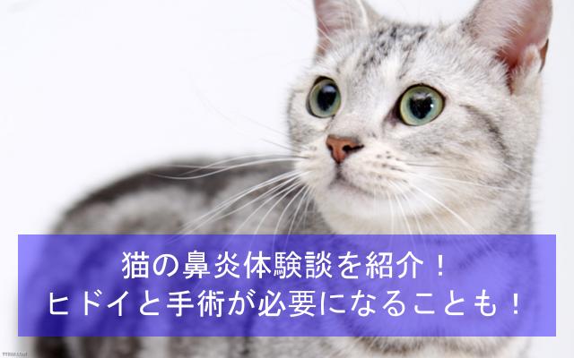 猫の鼻炎体験談を紹介