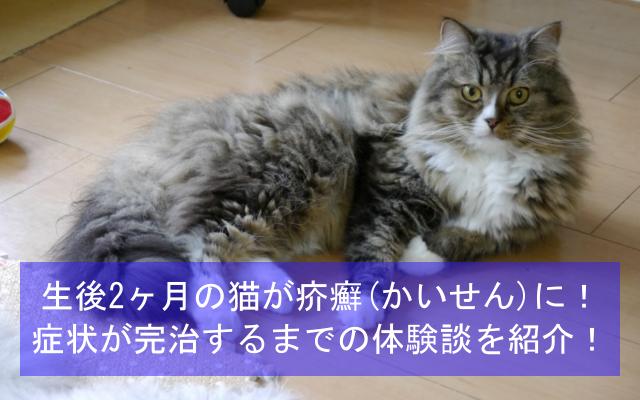 生後2ヶ月のネコが疥癬(かいせん)に