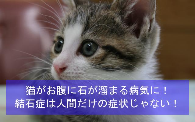 猫がお腹に石が溜まる病気に