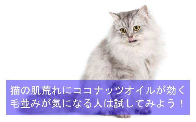 猫の肌荒れにココナッツオイルがオススメ