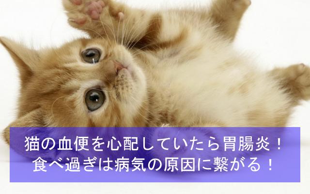 猫の血便を心配していたら胃腸炎だった