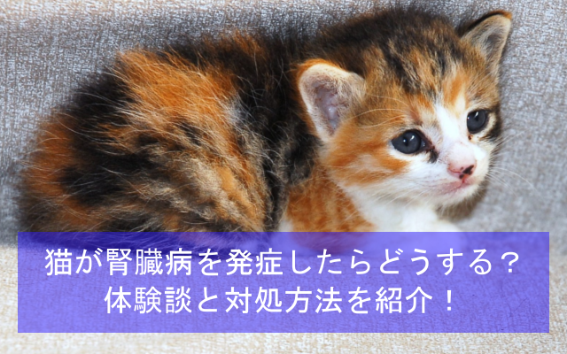 猫が初期腎臓病を発症したらどうする