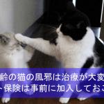 高齢の猫の風邪は治療が大変!ペット保険は事前に加入しておこう!