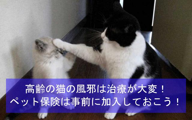 高齢の猫の風邪は治療が大変