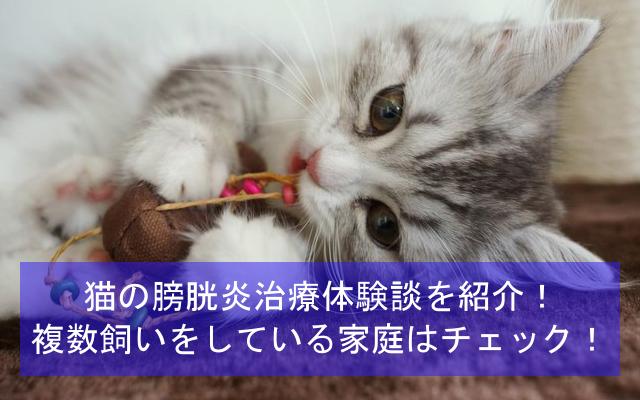 猫の膀胱炎治療体験談を紹介