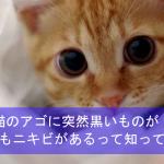 猫のアゴに突然黒いものが!猫にもニキビがあるって知ってる?