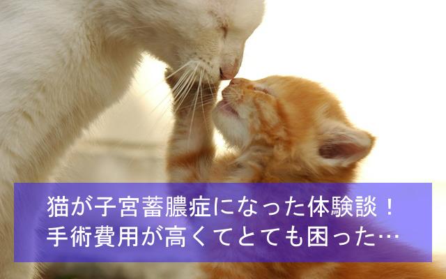 猫が子宮蓄膿症になった体験談