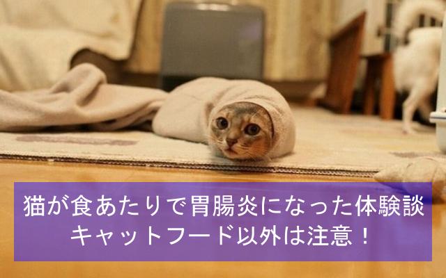 猫が食あたりで急性胃腸炎になった体験談
