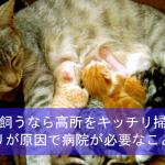 猫を飼うなら高所をキッチリ掃除!ホコリが原因で病院が必要なことも!