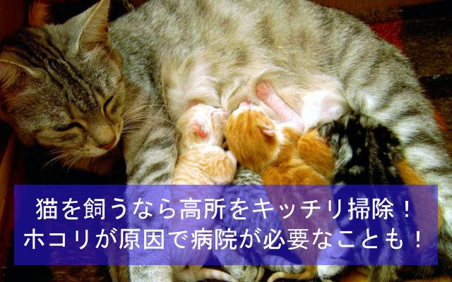 猫を飼うなら高所をキッチリ掃除