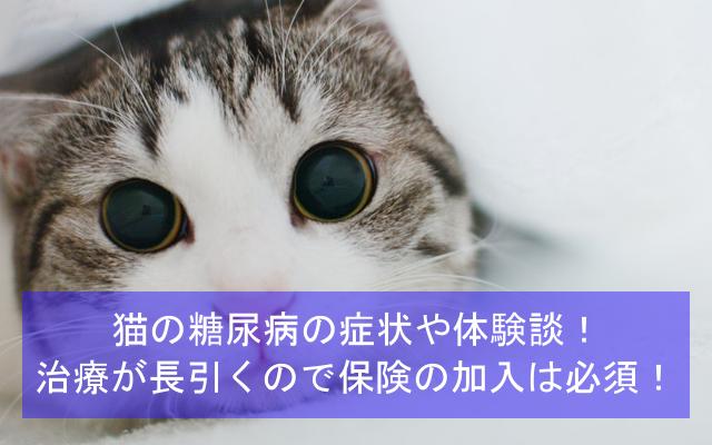 猫の糖尿病の症状や体験談