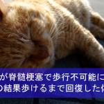 猫が脊髄梗塞で歩行不可能に!介護の結果歩けるまで回復した体験談!
