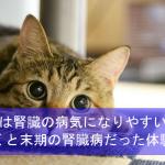 猫は腎臓の病気になりやすい!気付くと末期の腎臓病だった体験談!