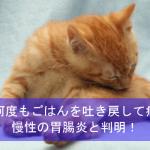 猫が何度もごはんを吐き戻して病院へ!慢性の胃腸炎と判明!【猫の病気体験談】