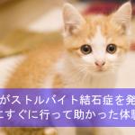 愛猫がストルバイト結石症を発症!病院にすぐに行って助かった体験談!