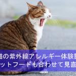 愛猫が紫外線アレルギーを発症した体験談!キャットフードも合わせて見直し!