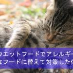 猫がツナのウエットフードでアレルギーに!安全なフードに替えて対策した体験談!