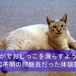 愛猫がトイレ外でおしっこを漏らすように!原因不明の膀胱炎だった体験談!