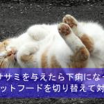 猫に鶏のササミを与えたら下痢になった体験談!キャットフードを切り替えて対策!