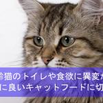我が家の高齢猫のトイレや食欲に異変が!腎臓に良いキャットフードに切替体験談!