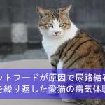 キャットフードが原因で尿路結石に?再発を繰り返した愛猫の病気体験談!